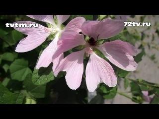 Какие цветы и растения в Тюмени-Петр Малюгин http://vkontakte.ru/petrmag