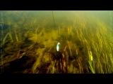 Атака щуки под водой